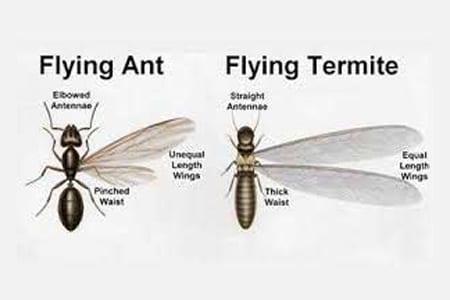 Termite Diagram